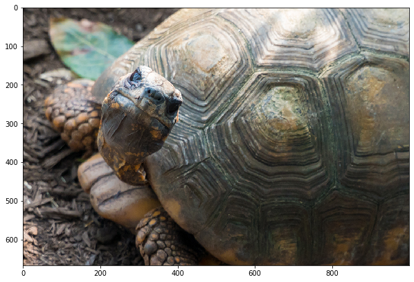 Grump the tortoise, the subject of our image testing