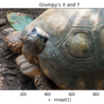 Grump the tortoise's X and Y axis and numpy array dimensions